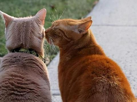 养猫分4个等级,越高级越幸福,你到哪个等级呢?