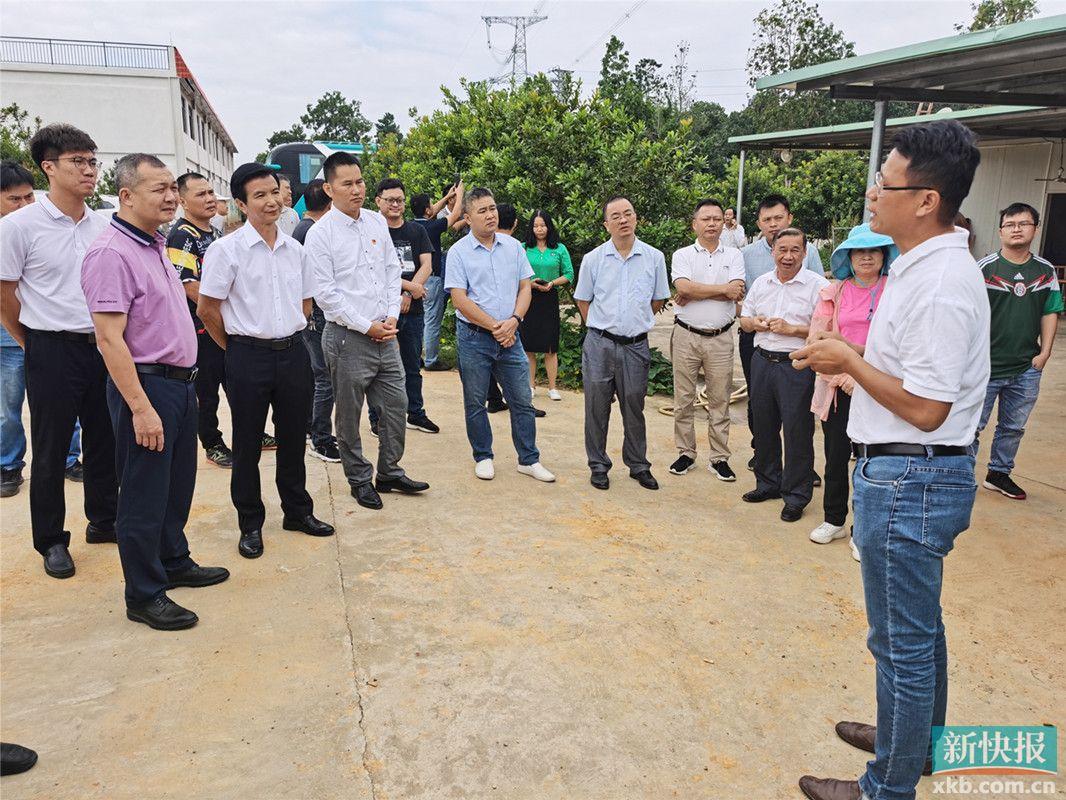 阳江市红丰镇召开乡村振兴工作现场会:发展与旅游业相结合的现代特色化农业