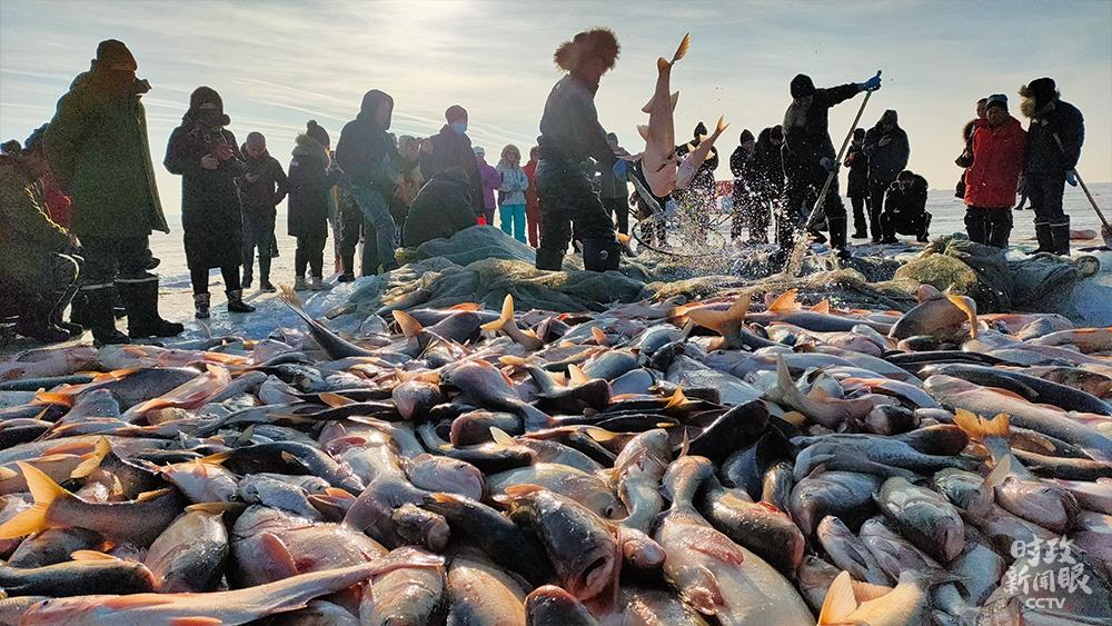 △2020年12月底,一年一度的吉林查干湖冬捕开网捕鱼。