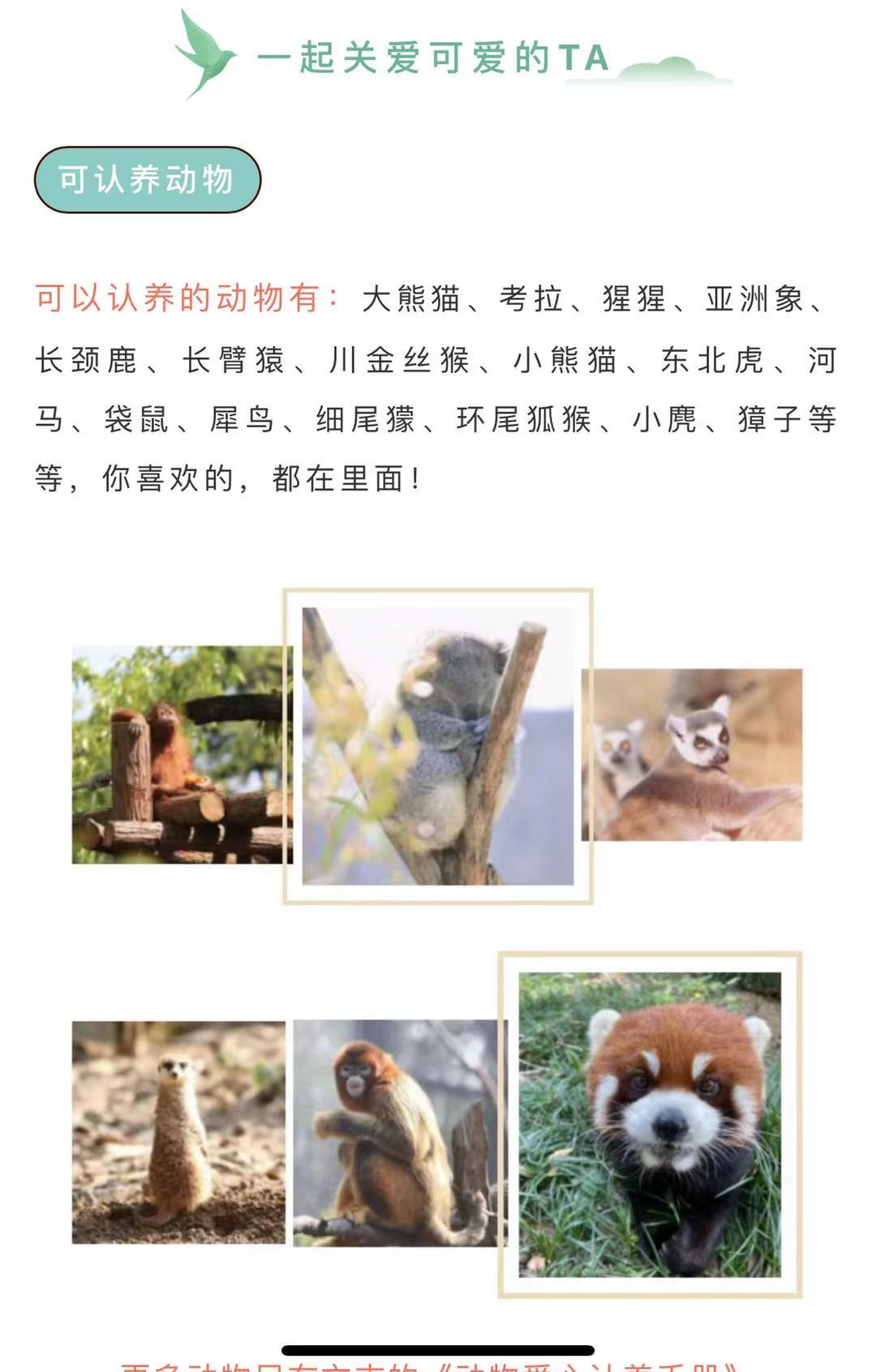 """动物爱心认养活动,可以在""""南京红山森林动物园""""微信公众号内认领。南京红山森林动物园 图"""