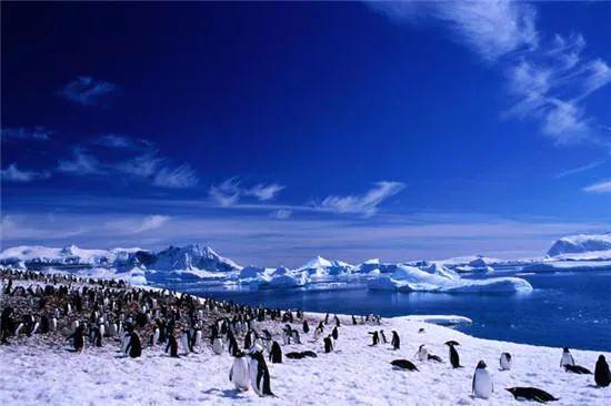 """警惕!南极又出现""""西瓜雪"""" 但这一点也不浪漫  第7张"""