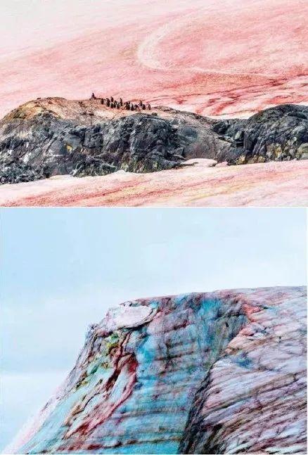 """警惕!南极又出现""""西瓜雪"""" 但这一点也不浪漫  第1张"""