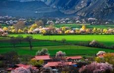 """2021年西藏首趟""""桃花""""专列抵达拉萨,拉开林芝"""