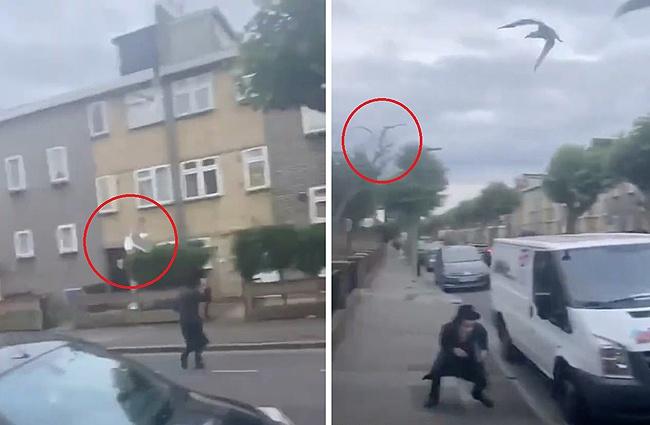 伦敦街头一男子被海鸥追逐攻击 不断俯冲向其猛扑