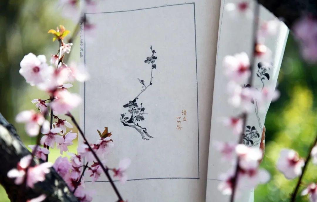 风雅传奇 《十竹斋笺谱》复刻重刊:明清士大夫的雅致清玩