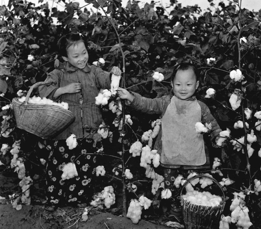 《国家相册·花开天下暖》:爱国发家,多种棉花!
