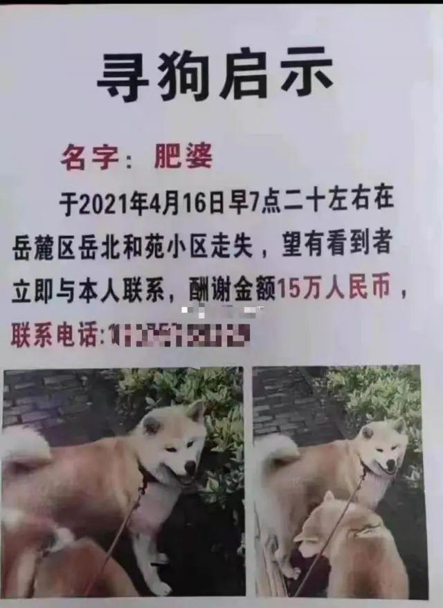 長沙女子懸賞15萬找寵物狗?當事人回應