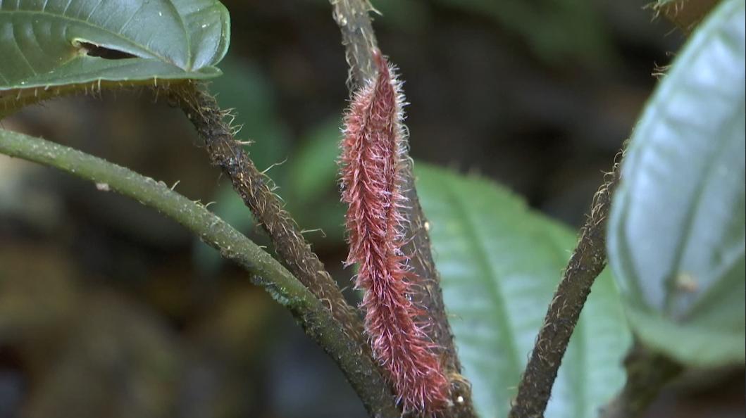 【COP15】云南又有新物种被发现!就在……