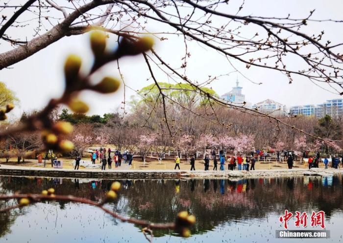 资料图:3月18日,市民和游客在北京玉渊潭公园观赏樱花。 中新社记者 杜洋 摄