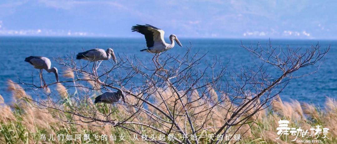 【COP15】看精灵翩跹舞动!玉溪的这个生物多样性纪录片美翻了