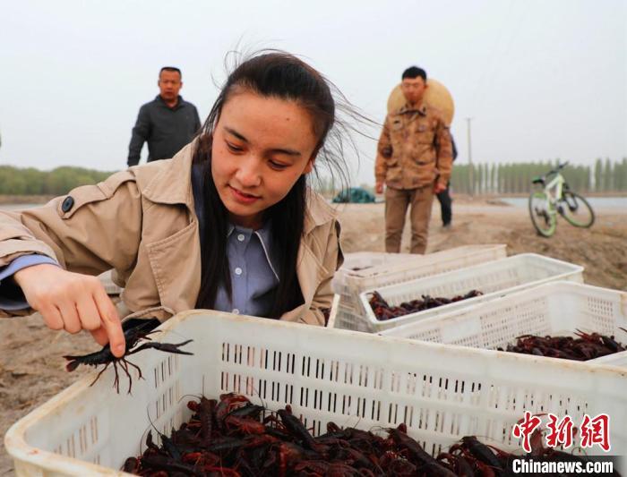 新疆兵团生态虾养殖规模化 市场青睐民众致富