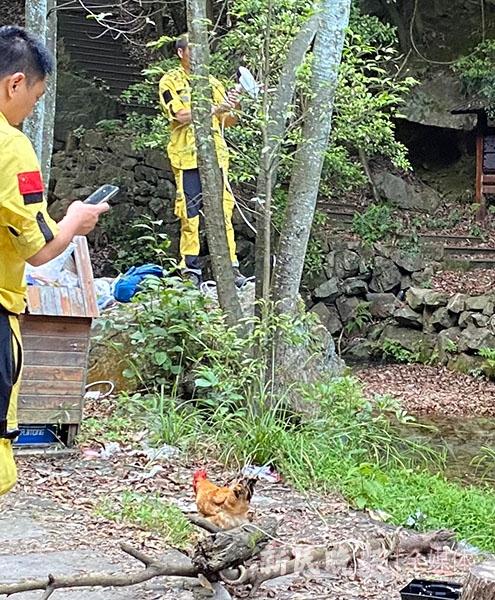 图说:救援队员将鸡拴在点位的树木上 姜燕/摄