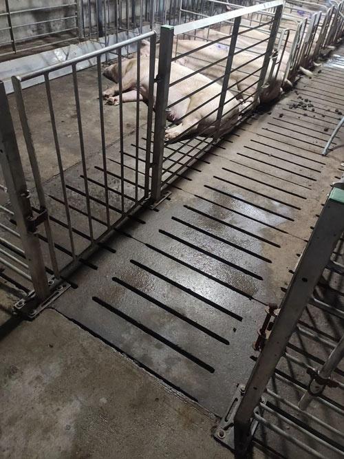 李迪在猪舍隔离时洗澡的地方。受访者供图