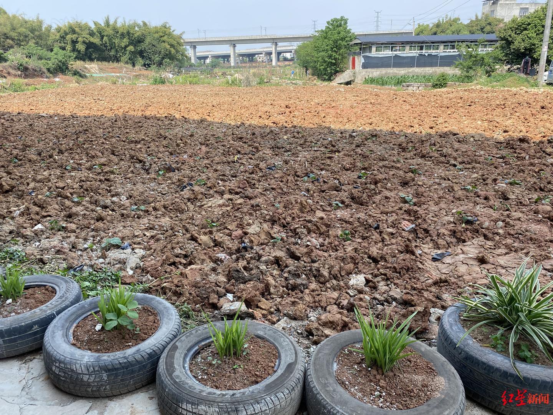 准备修建的停车场推平之后扬尘、下雨天道路泥泞?街道:已复耕绿植