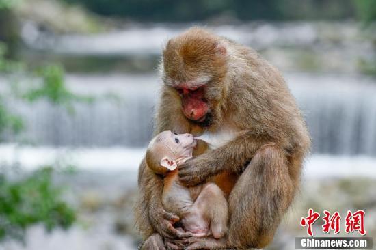 国际生物多样性日 探寻武夷山国家公园里的生物秘密