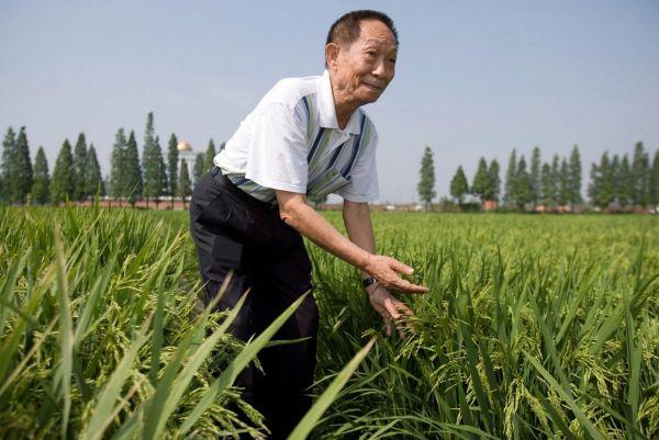 参考人物 袁隆平:让饥荒成为遥远的记忆