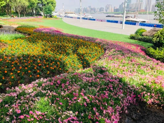 1100平方米花境率先开放,北外滩滨江景观预计月底完工