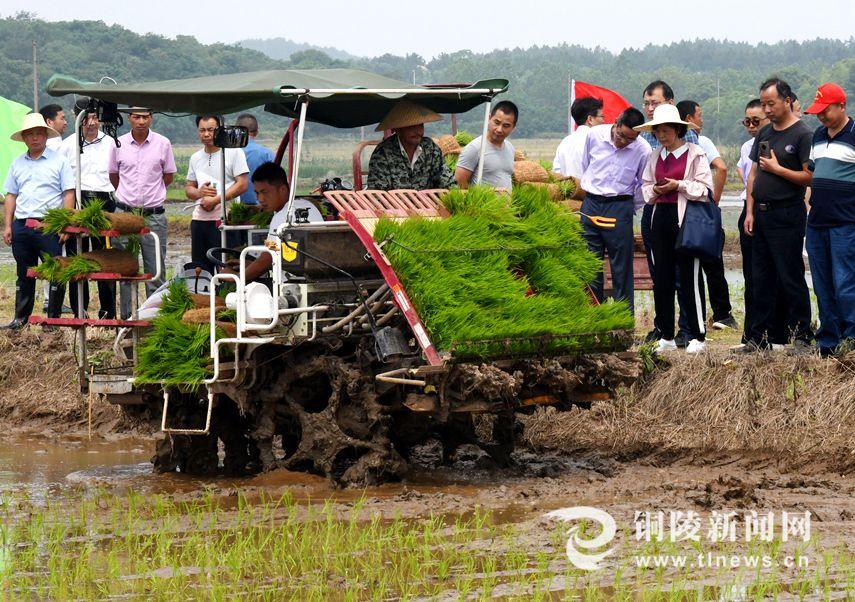 安徽铜陵:水稻侧深施肥 农业提质增效