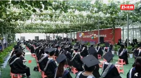 长沙一大学毕业典礼在葡萄架下举行!来看看这次是不是你家的学校