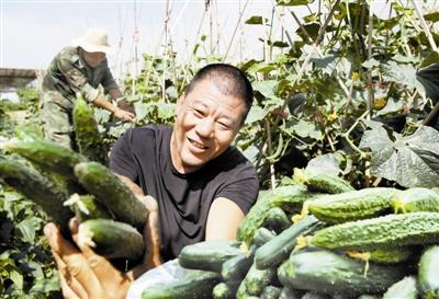 露地蔬菜采摘上市