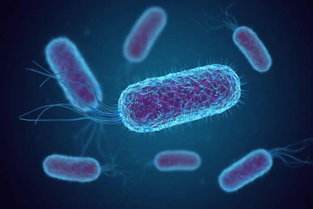 为啥食物中大肠杆菌爱超标?本尊亲自回应了