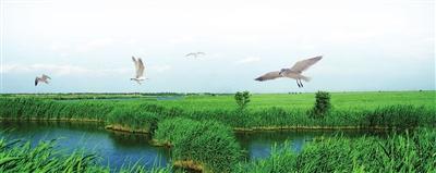 打造高质量生态幸福之城——宁河区持续推进创新绿色发展谱新篇