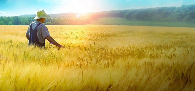 捐赠100万美元,嘉吉在吉林松原启动玉米种植农户风险管理试点