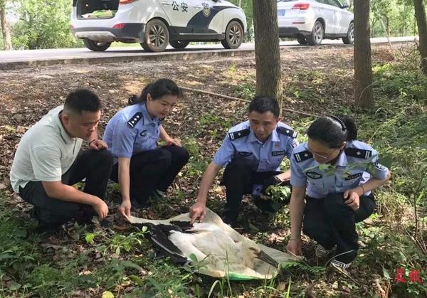东方白鹳意外受伤滞留路边 进贤民警将其送至救护防疫中心