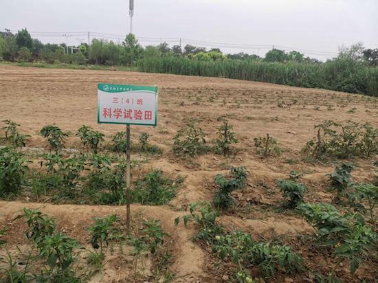 """阜阳市太和县第三中学东校区""""科学实验田""""让孩子们快乐成长"""