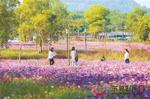 大朗将升级改造凤山农业科技园