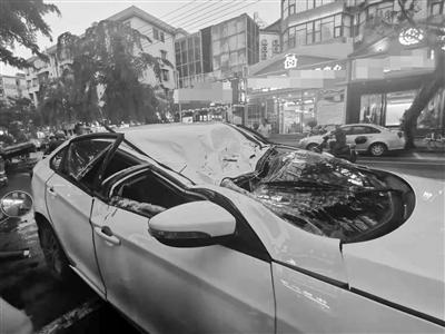 风雨中榕树倾倒砸坏轿车