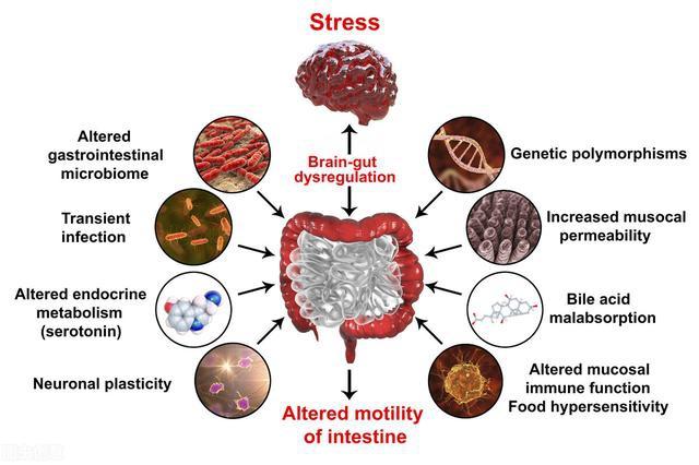 代谢性炎症综合征炎症因子从哪来?这三个方面是主要原因