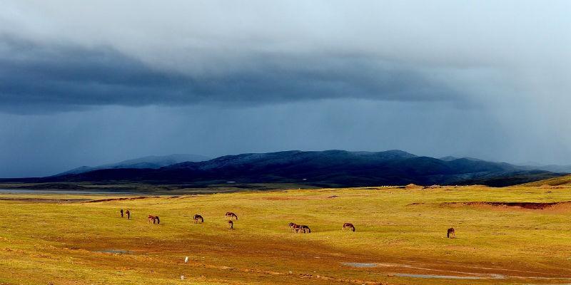 青藏高原可可西里地区再现巨大露天垃圾带