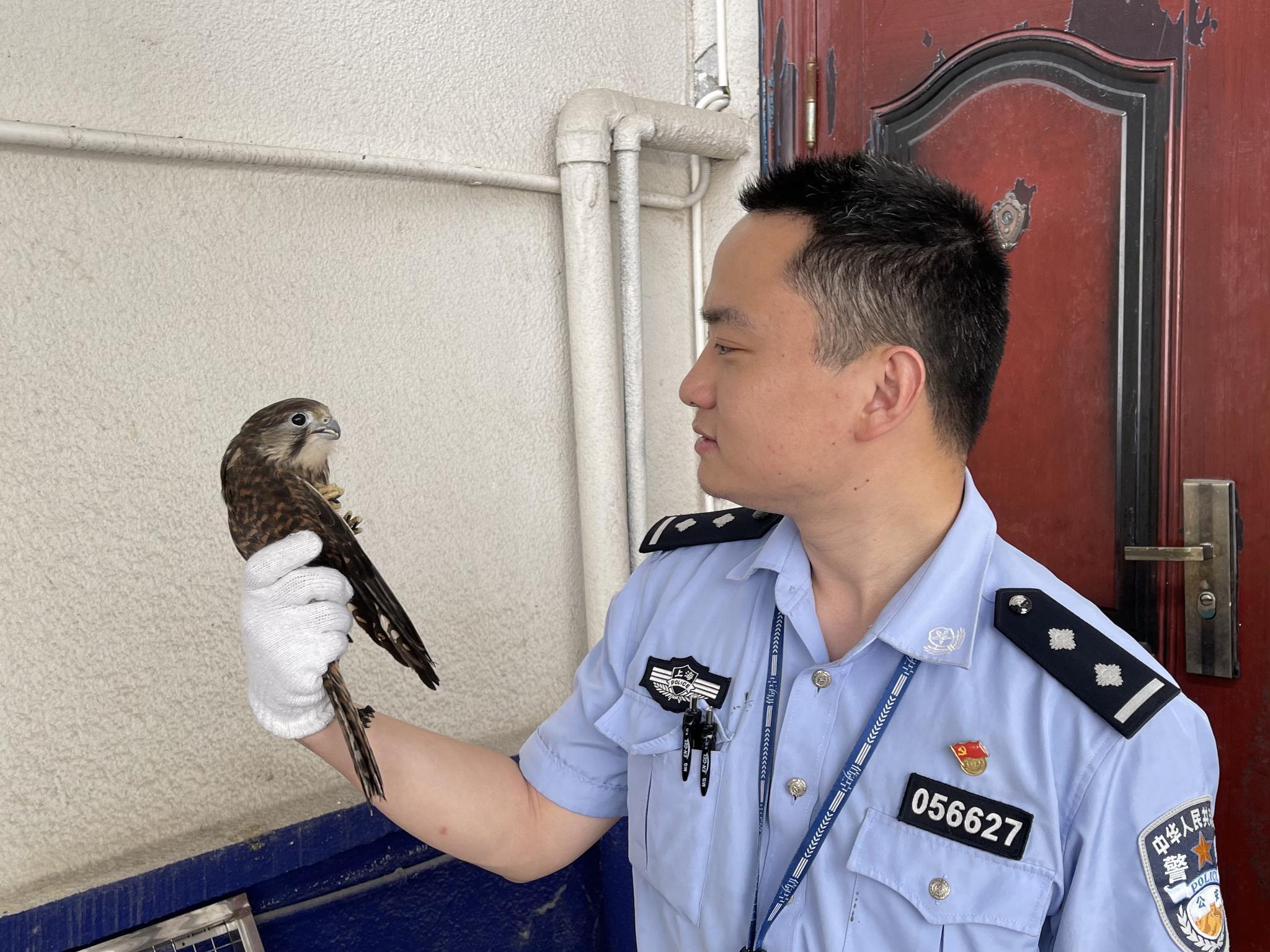 民警市民接连救助野生鸟类,其中还有国家二级保护动物