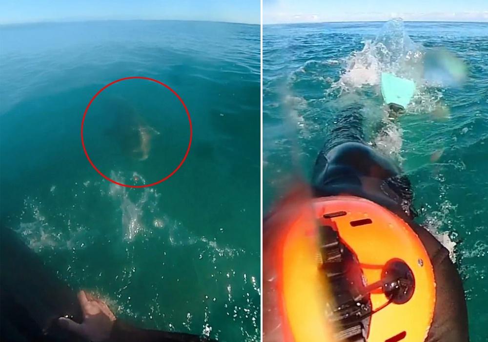 澳大利亚男子海上冲浪时遇鲨鱼 用脚蹼将其击退