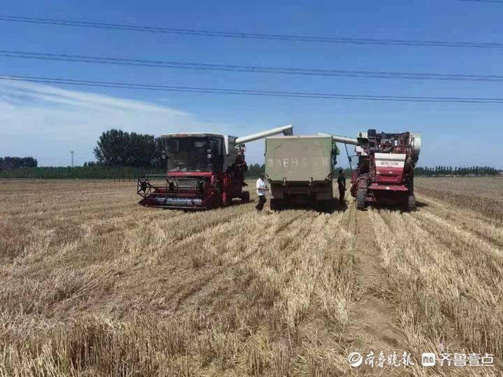 惠民县姜楼镇10万亩小麦颗粒归仓