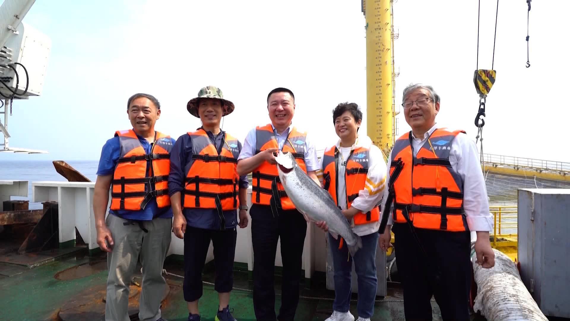 """""""深蓝一号""""让青岛市民在家门口就可以吃到新鲜三文鱼"""