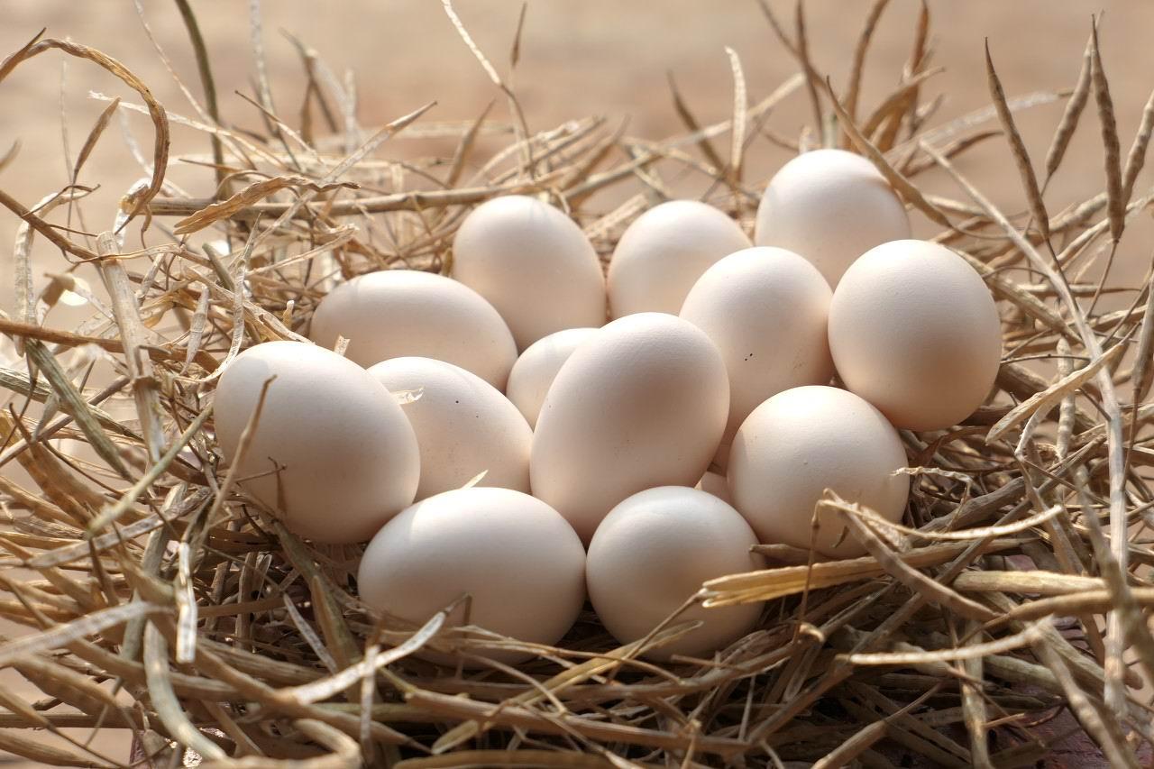 本市3批次食用农产品抽检不合格,其中含重金属超标