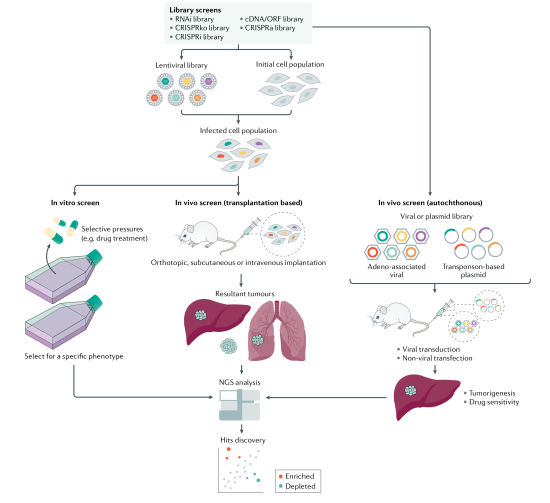 高通量功能基因筛选技术平台给肝癌患者带来希望 肺癌精准治疗管线或拓宽