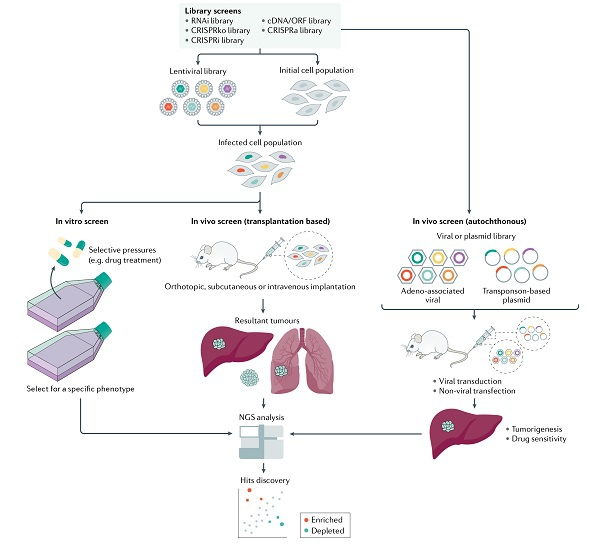 """仁济上海肿瘤所研究新进展:""""基因剪刀""""或将有助开辟肝癌的潜在治疗策略"""