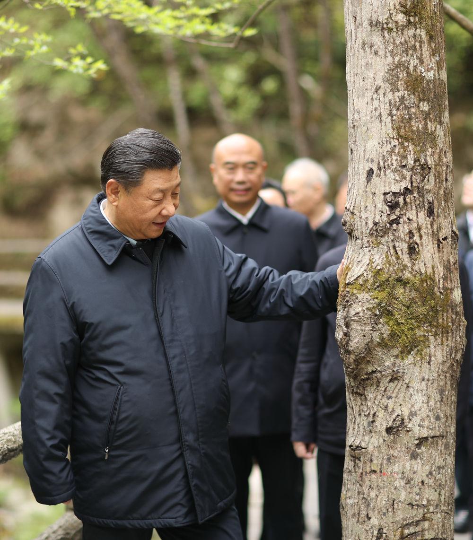 2020年4月20日至23日,习近平在陕西考察。这是4月20日,习近平在位于商洛市柞水县的秦岭牛背梁国家级自然保护区,考察秦岭生态保护情况。