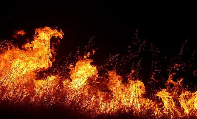 美国亚利桑那州两场山火已经烧毁超过5万公顷的土地