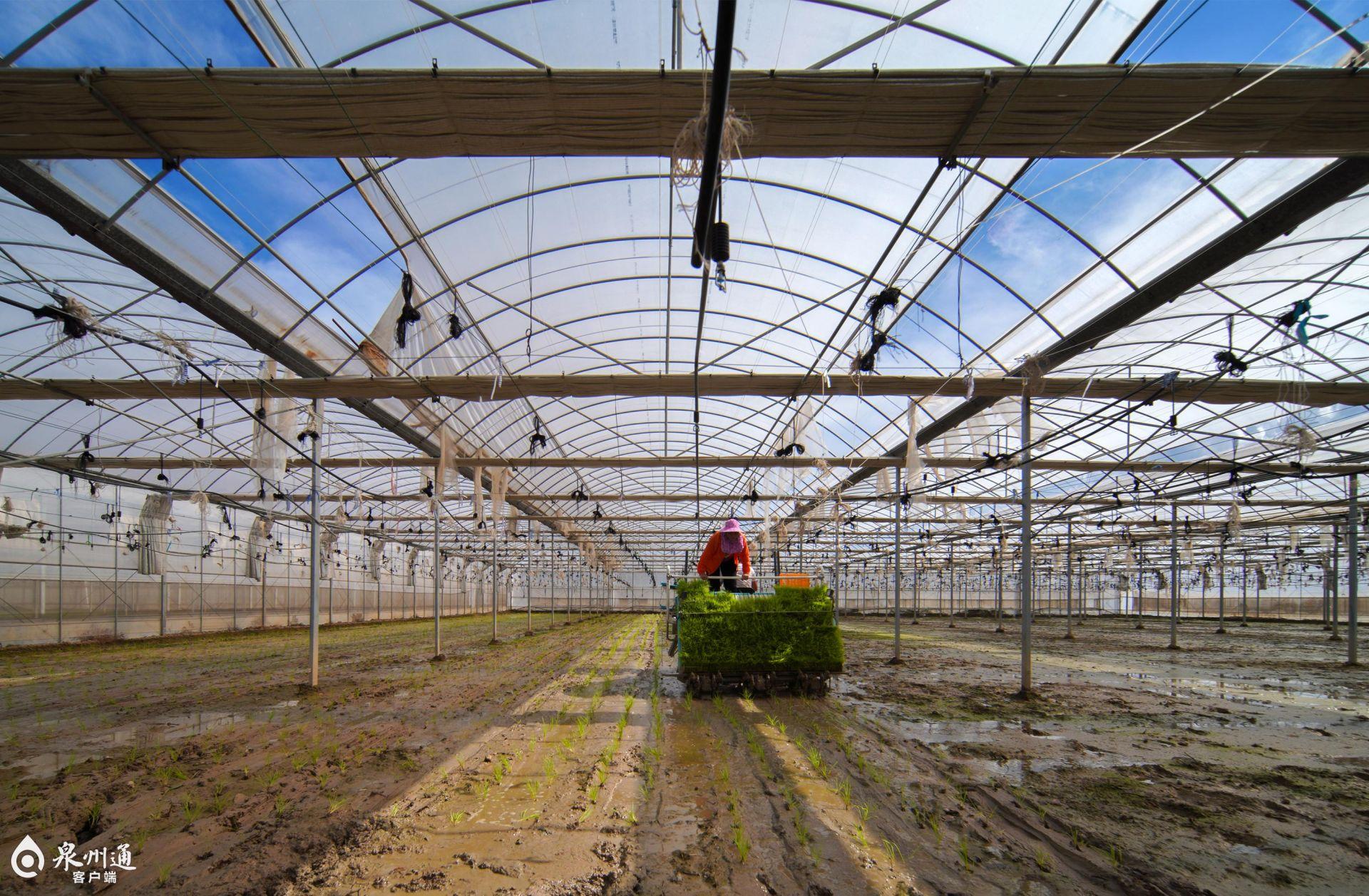 晋江:探索水旱轮作栽培模式促土壤改良