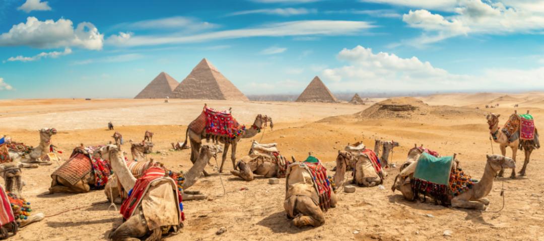 ICO国际研讨会:国际专家讨论骆驼文化和生存方式对可持续发展的贡献