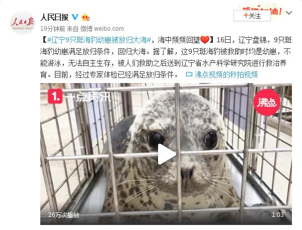 辽宁9只斑海豹幼崽被放归大海,海中频频回望