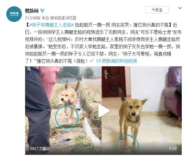 狗子学瘸腿主人走路 网友笑哭:捶它狗头真的不冤