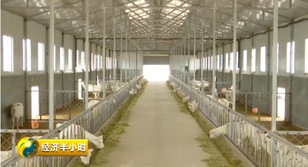 奶山羊养殖合作社