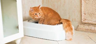 寵物在自動貓廁所時,傳感器能檢測到,還會自動沖洗。