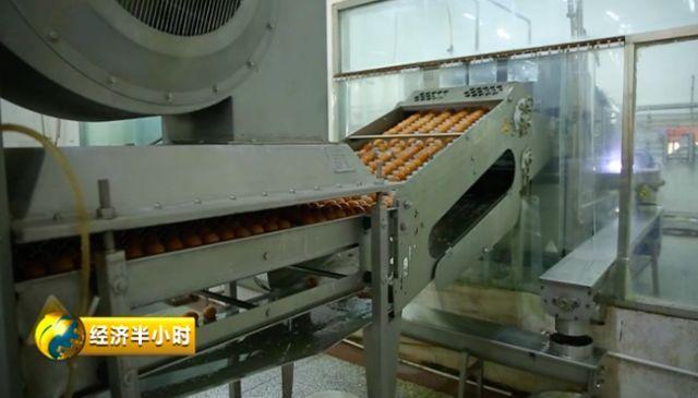 禽蛋加工企业