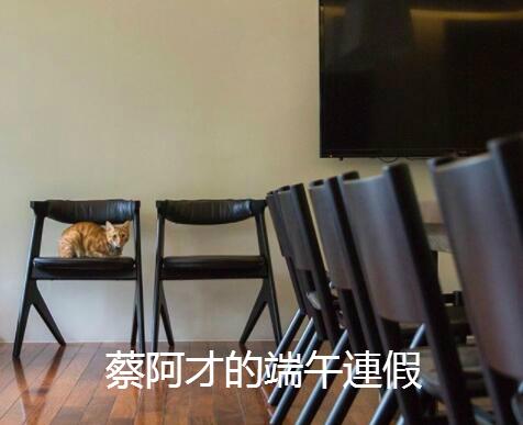蔡英文的宠物猫(台媒)